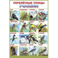 Плакат. Перелетные птицы России