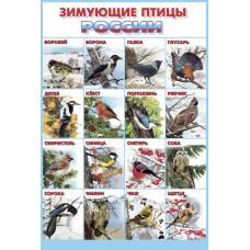 Плакат. Зимующие птицы России