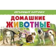 Карточки. Домашние животные