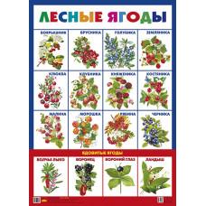 Плакат. Лесные ягоды