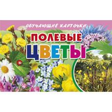 Карточки. Полевые цветы
