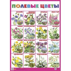 Плакат. Полевые цветы