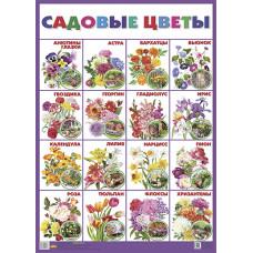 Плакат. Садовые цветы