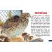 Карточки. Домашние птицы
