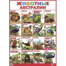 Плакат. Животные Австралии