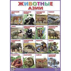Плакат. Животные Азии