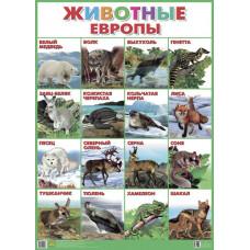 Плакат. Животные Европы