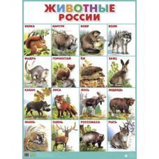 Плакат. Животные России