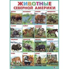 Плакат. Животные Северной Америки