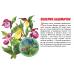 Карточки (европодвес). Полевые цветы