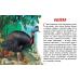 Карточки (европодвес). Животные Австралии