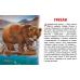 Карточки (европодвес). Животные Северной Америки