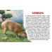 Карточки (европодвес). Животные Южной Америки