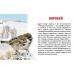 Карточки. Зимующие птицы России